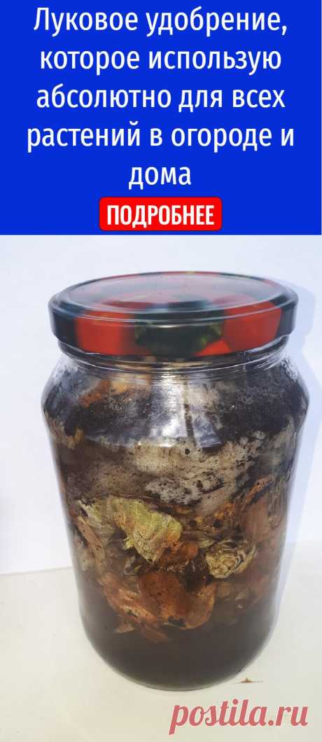 Луковое удобрение, которое использую абсолютно для всех растений в огороде и дома