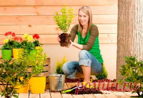 Комнатные растения и здоровье Множество комнатных растений обладают целебными свойствами.  Какие растения выбрать?