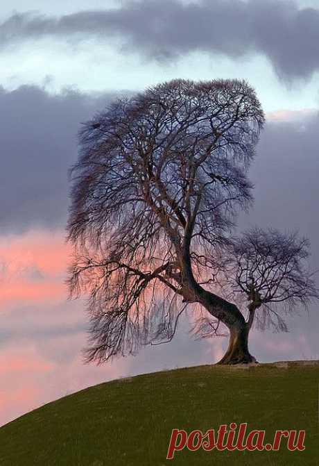 Dawn Tree | The Beauty of Trees II