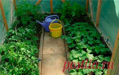 Whether it is possible to put to one greenhouse and tomatoes, and cucumbers
