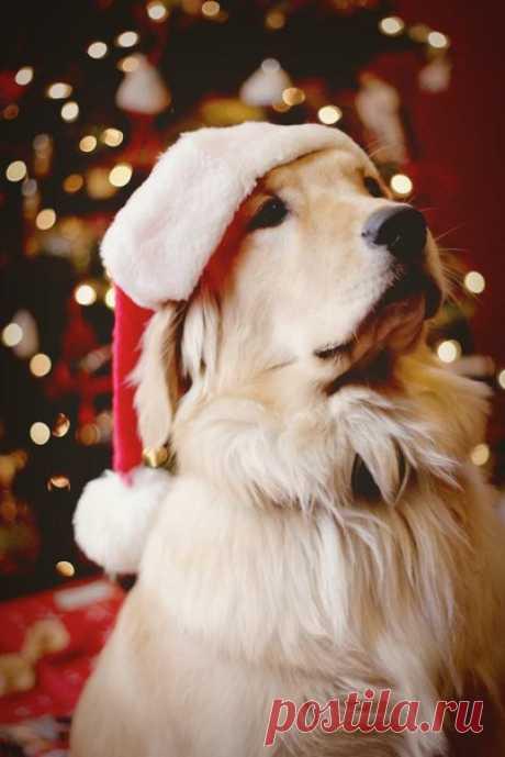 Скоро Новый год! Год Собаки!😊