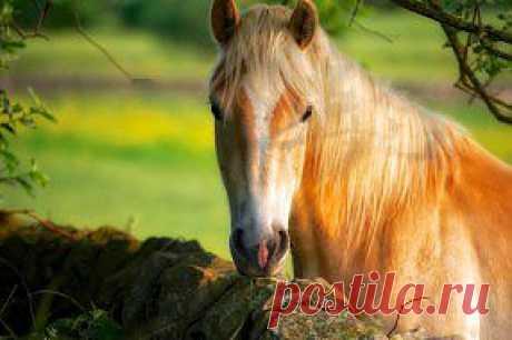 Обои Животные Лошади, обои для рабочего стола, фотографии животные, лошади, красавица Обои для рабочего стола, скачать обои картинки заставки на рабочий стол.