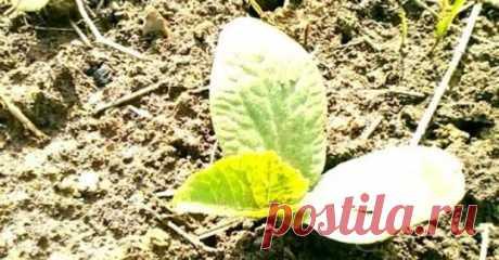 (11) Дача, сад и огород цветы-растенияводство.цветы, идеи, советы, дачники