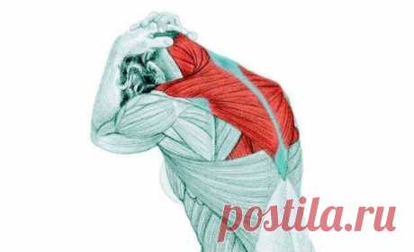 Самомассаж трапециевидной мышцы избавит от боли в плечах, спине, голове и руках Трапециевидная мышца часто является источником боли и жжения в плечах, верхней части спины, голове, шее и руках. Самомассаж трапециевидной мышцы позволит избавиться от боли.