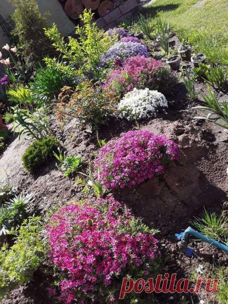 Почвопокровные растения: флокс шиловидный | Лейка и блокнот | Пульс Mail.ru Как быстро скрыть неприглядные участки в саду