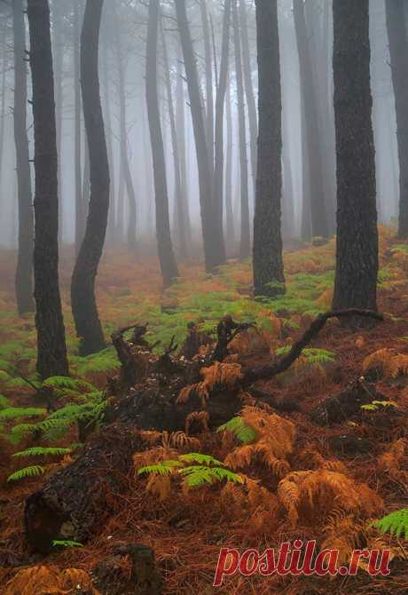 Landscape & Nature Photography Piedralaves, Spain - by Juan Pavon