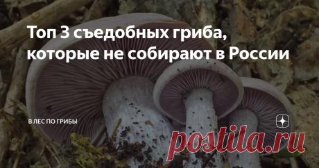 Топ 3 съедобных гриба, которые не собирают в России В одном из журналов про грибы, довольно известном, было отказано, что в России растет около 5000 съедобный грибов. Вы только представьте, что эта за цифра такая. Я так подсчитал, что у меня собираемых видов, которые я хочу видеть у себя на столе около 20 наберется, не более.