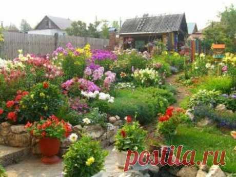Многолетние цветы для дачи, фото с названиями, каталог Большая часть дачников для своего участка выбирает многолетние цветы для дачи, потому что они требуют меньшего количества внимания и заботы.
