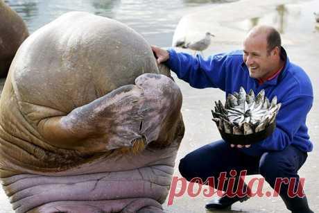 Как зверюшки отмечают день своего рождения / Питомцы