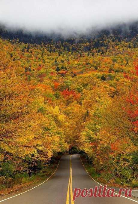 Мир без фотошопа. Туннель осенних деревьев в «Ущелье контрабандистов». Вермонтский парк, США.
