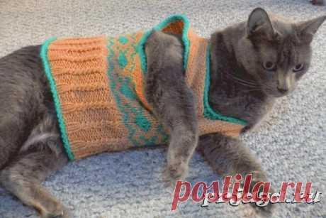 La blusa para la gata por los rayos