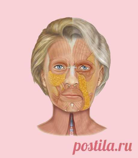 Как «поставить на место» лицо: Простое упражнение для противодействия возрастным изменениям   Golbis