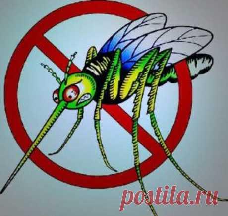 Народные средства от комаров и мошек.