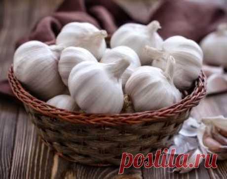Топ-5 лучших способов хранения чеснока в квартире | На грядке (Огород.ru)