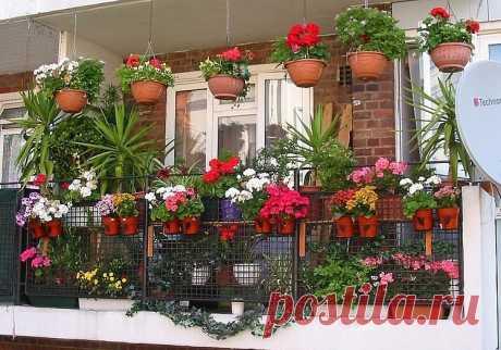 Секретики для роскошного цветника в квартире