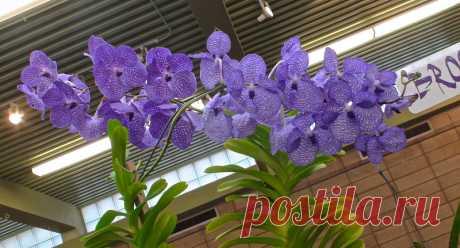 Успешный уход за орхидеями
