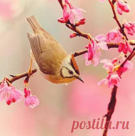 Весна - самое подходящее время для того, чтобы приманить свою птицу счастья!