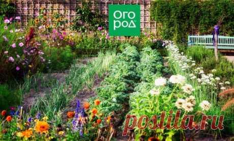 5 цветов, которые обязательно должны быть на вашем участке | В цветнике (Огород.ru)