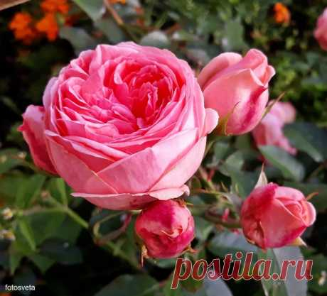 Розовый сентябрь 💗