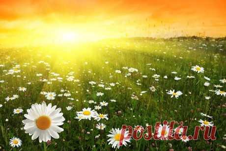 Красиво очень всходит солнце летом, Ещё есть до восхода полчаса, Но в сумерках ночных перед рассветом Уже алеет в небе полоса.  А полоса становится всё шире, Не показалось солнышко пока, Раскрашено всё чудно в божьем мире, Как мак, алеют в небе облака.  А сумерки уходят постепенно, И светом озарились небеса, Вдруг показался солнца край мгновенно, Восход – неизгладимая краса.