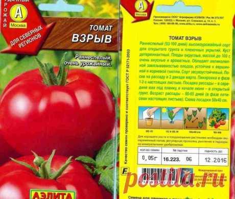 Пять сортов томатов, посадив которые, вы будете снимать урожай раньше соседей | Рекомендательная система Пульс Mail.ru