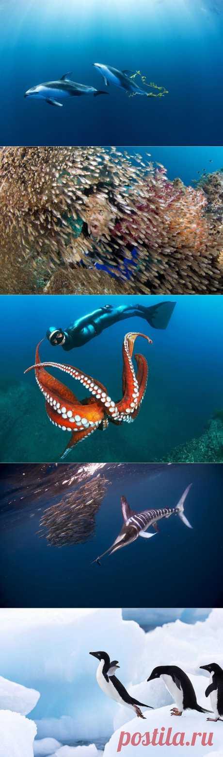 Волшебство океана | ХОЧУ ВСЁ ЗНАТЬ
