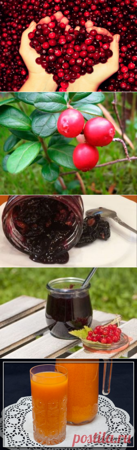 Поиск на Постиле: морсы из ягод