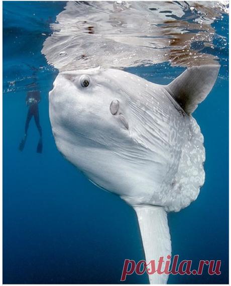 Ученые рассказали о рыбе, которая вырастает в 60 миллионов раз (фото) - Новости Mail.ru