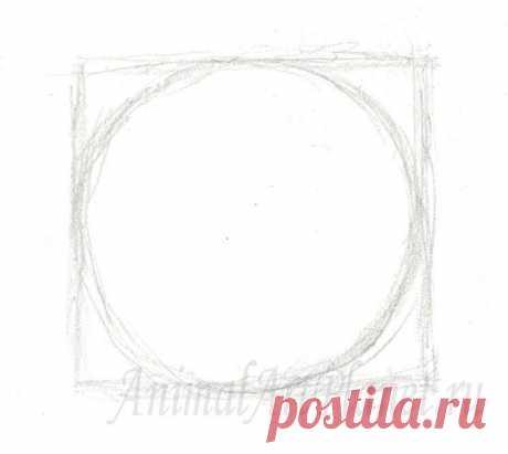 Как нарисовать кошачий глаз на бумаге карандашом поэтапно