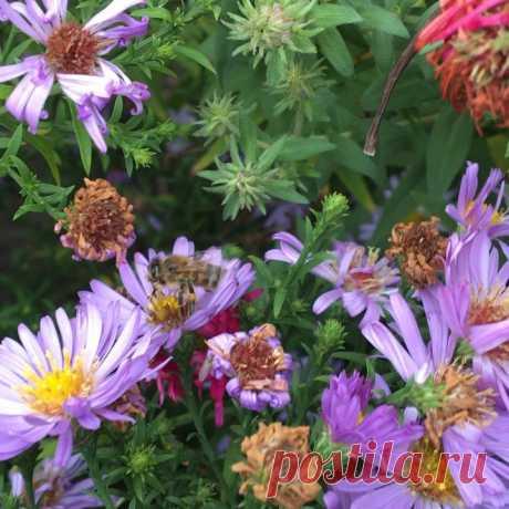 Олег Старченко в Instagram: «Октябрь, сейчас +12, пасмурно, а наши пчелки трудятся... 🐝🐝🐝🐝🐝🐝 #пчелы #медхарьков #Apihouse #beekeeping #пасіка #honeybees #bees #🐝🐝🐝…» 25 отметок «Нравится», 0 комментариев — Олег Старченко (@apihouse) в Instagram: «Октябрь, сейчас +12, пасмурно, а наши пчелки трудятся... 🐝🐝🐝🐝🐝🐝 #пчелы #медхарьков #Apihouse…»