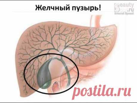 Gall bladder. Part 1 - Stages of formation of bile.