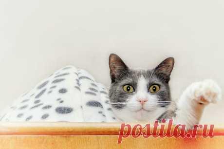 Владельцу кошки нужно следить за ее здоровьем. Кошачья простуда является одной из самых частых причин беспокойства для тех, кто ухаживает за этими домашними животными. Но болезнь не так уж сложно идентифицировать и вылечить.