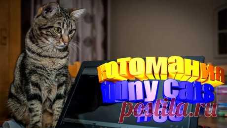 видео котов смешных, смешные видео котов, кот смешной видео, смешное видео котов, видео коты приколы, том кот видео, видео приколы котов, видео про кота, кота видео, смешные животные, видео смешных животных, животные видео смешное, видео смешное животных, смешное животные, коте видео, прикол с котом, приколы о кошках, коты и приколы, видео смешные кошки, смешные кошки видео, видео кошек смешное, видео смешных кошек, кошки смешное, кошка смешно, видео кошек смешные, смешные кошка