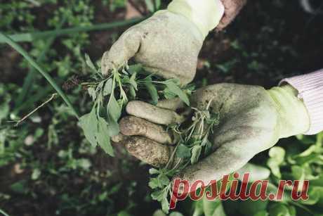 Я перестала полоть сорняки в междурядьях и соседи тоже так делают | Хочу на дачу! | Яндекс Дзен