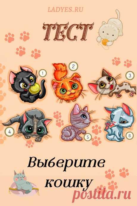 Посмотрите внимательно на иллюстрацию и выберите кошку, которая вам больше всего нравится.