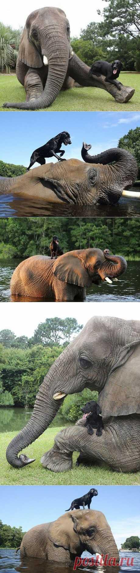 Дружба слона и собаки