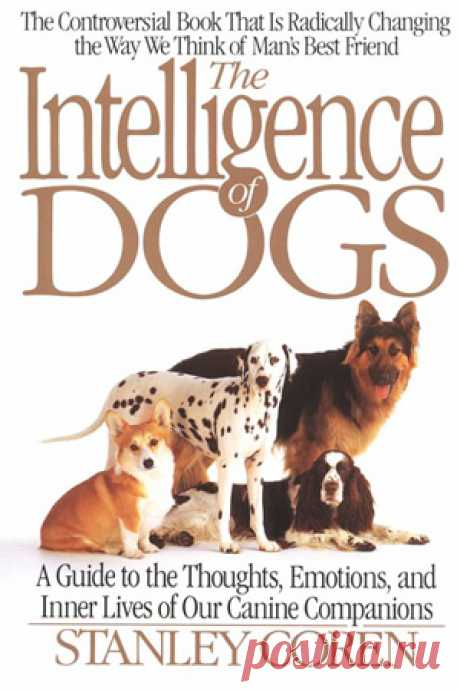 Самые умные породы собак. Рейтинг ТОП 10 самых умных пород собак с фото