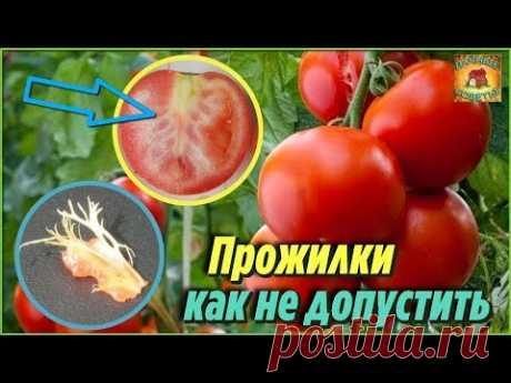 Самые важные причины, почему помидоры вырастают с белыми прожилками внутри. Дачные советы - YouTube