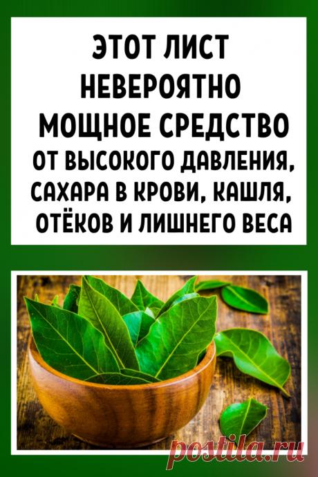 Этот лист — невероятно мощное средство от высокого давления, сахара в крови, кашля, отёков и лишнего веса!    Эти рецепты удивительно эффективны! Сохраните себе, они точно вам пригодятся!    Листья этого растения широко используется в кулинарии из-за его замечательного аромата.    Но лавр — не просто приправа — это также лекарственное растение, используемое при лечении различных заболеваний.    Это отличное мочегонное, противоревматическое, противовоспалительное средство, ...