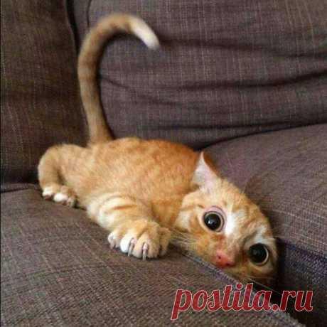 Когда искал пульт в диване, и наткнулся на что-то