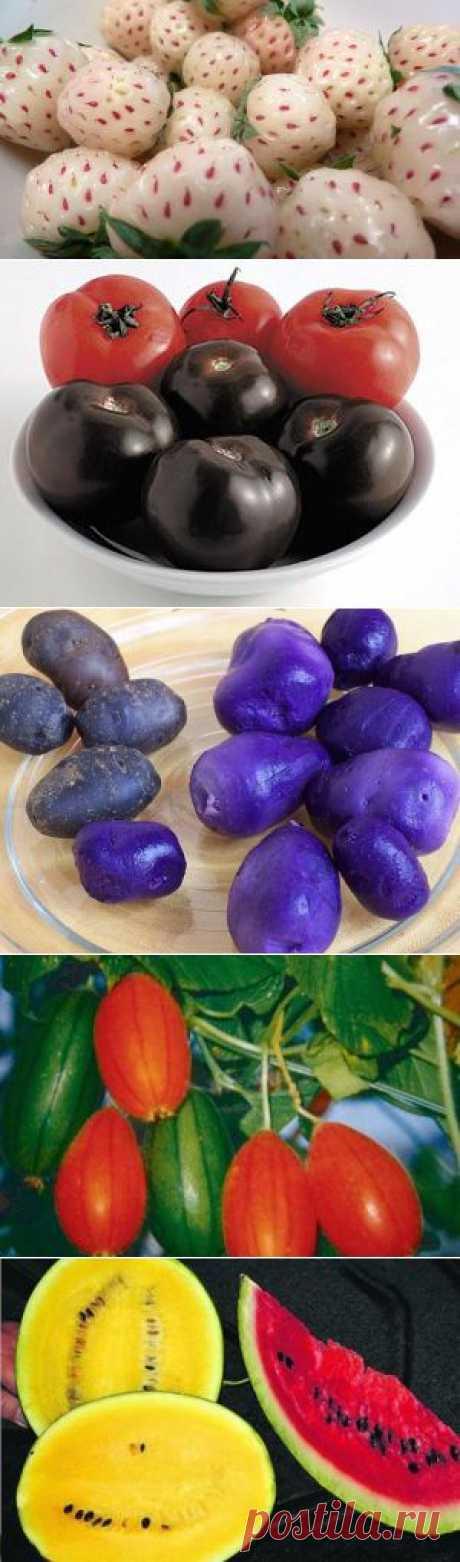 (+1) тема - Необычные овощи и фрукты | Любимые рецепты