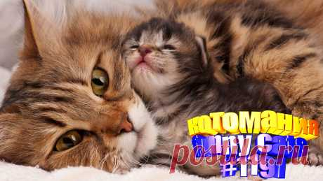 Вам нравится смотреть приколы про кошек? Тогда мы уверены, Вам понравится наше видео 😍. Также на котомании Вас ждут: видео кот,видео кота,видео коте,видео котов,видео кошек,видео кошка,видео кошки,видео о котах, видео про, видео с котиками, кот смешное видео, котов, кошка видео приколы, кошки, приколы о кошках видео, про кошек смешных, с котами, смешное о кошках, смешные видео про кошки, смешные коты
