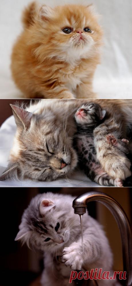 Красивые кошки фото