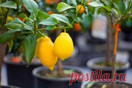 Популярная экзотика среди комнатных растений