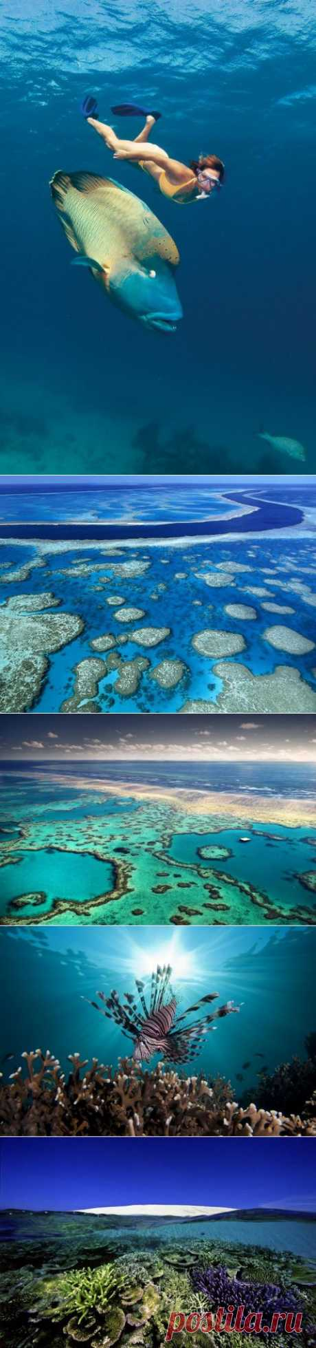 (+1) - Большой Барьерный риф! | УДИВИТЕЛЬНОЕ