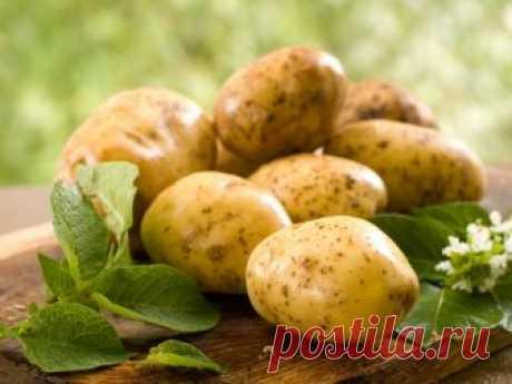 Как лечиться картофелем