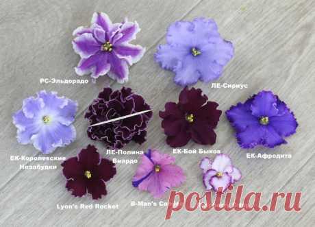 Цветочный Рай - фиалки, стрептокарпусы от Алены Кошкаровой г. Тюмень цветы - почтой