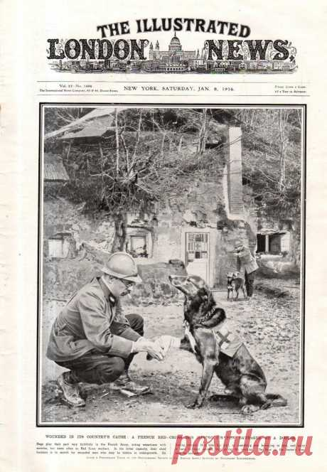 1916.01.08 - The Illustrated London News (New York) | Sovetika.ru - обложки старых журналов
