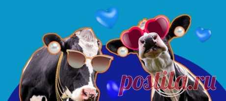 Одним махом дарим вам возможность, наконец, разобраться в себе и повод для праздника. Сегодня Всемирный день молока — самое время узнать, какая вы корова!