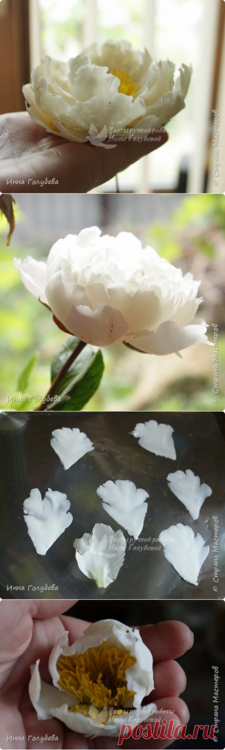 Peony from hf. MK. Part one. | Country of Masters